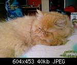 Click image for larger version  Name:  Goldie.jpg Views: 50 Size:  40,1 KB