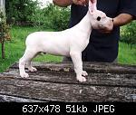 Click image for larger version  Name:  fleka.jpg Views: 1 Size:  51,0 KB